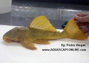 AquaScapeOnline, Online fish store that sells piranhas ...